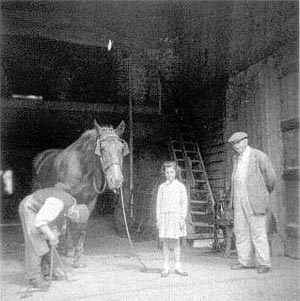 Wilfred Ives shoeing a horse 1954